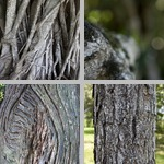 Bark photographs