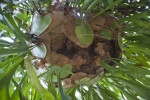 Base of a Staghorn Fern at the Washington Oaks Gardens State Park