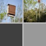 Bat Boxes photographs