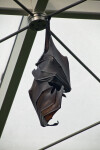 Bat Hanging from a Wire
