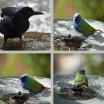 Bathing photographs