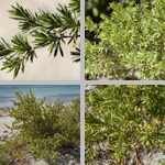 Bay-Cedars photographs