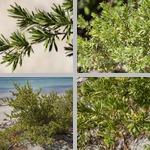 Bay-Cedars photographs
