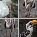 Beaks photographs