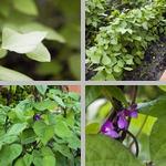 Beans photographs