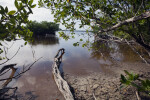Bear Lake, with Mangroves and Log