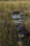 Bedrock at Everglades National Park