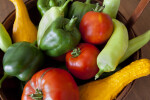 Beefstake Tomatoes, Green Bell Peppers, Light-Green Chili Peppers, & Crookneck Squash