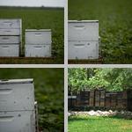 Beekeeping photographs
