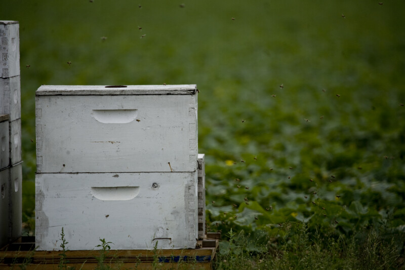 Bees Around Box