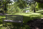 Bench in Shade