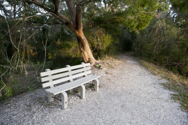 Bench Near Tree