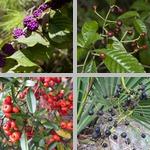 Berries photographs