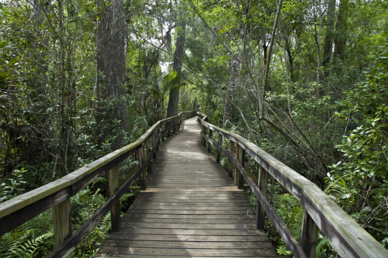 Florida Parks And Rivers On Pinterest
