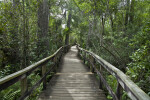 Big Cypress Bend Boardwalk at the Fakahatchee Strand Preserve State Park
