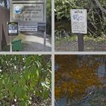 Big Cypress Bend Boardwalk photographs