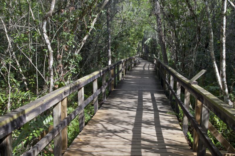 Big Cypress Bend Boardwalk
