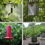 Bird Feeders photographs