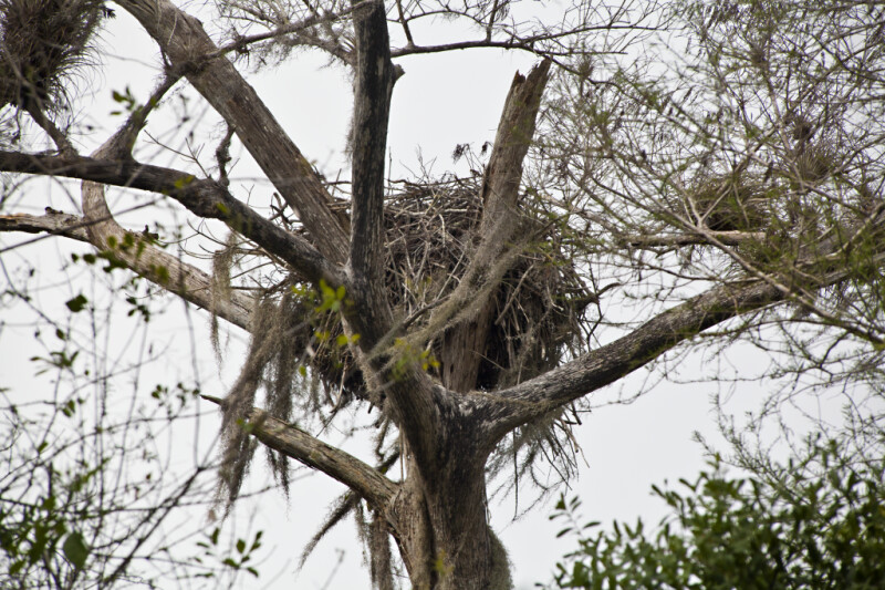 Bird Nest Secured in Branches of a Tree
