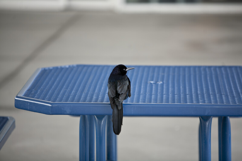 Bird on Table
