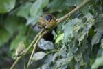 Bird Perched on a Branch at the Schönbrunn Tiergarten