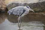 Bird Standing in Shallow Water