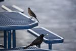 Bird with Food