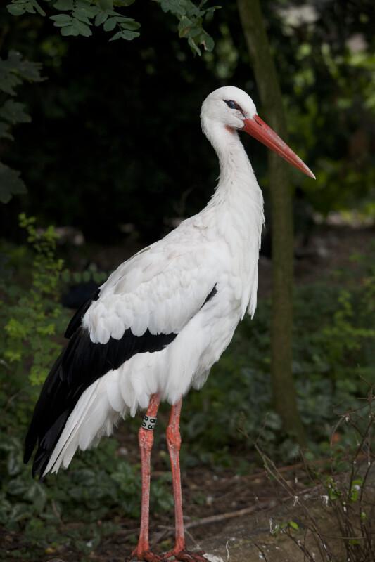 Bird with Orange Beak Displaying Nictitating Membrane