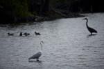 Birds at Mrazek Pond
