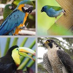Birds photographs