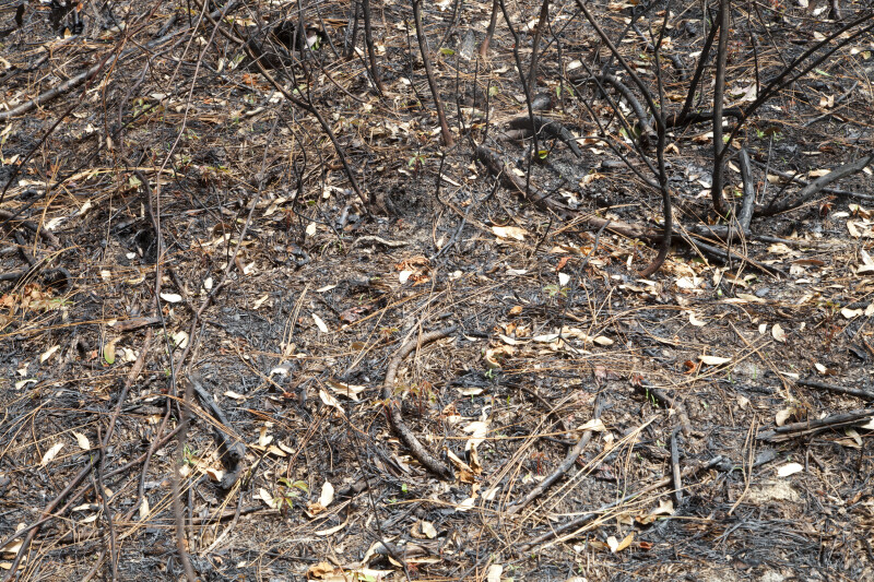 Blackened Branches and Ground