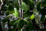 Blolly Leaves and Branches