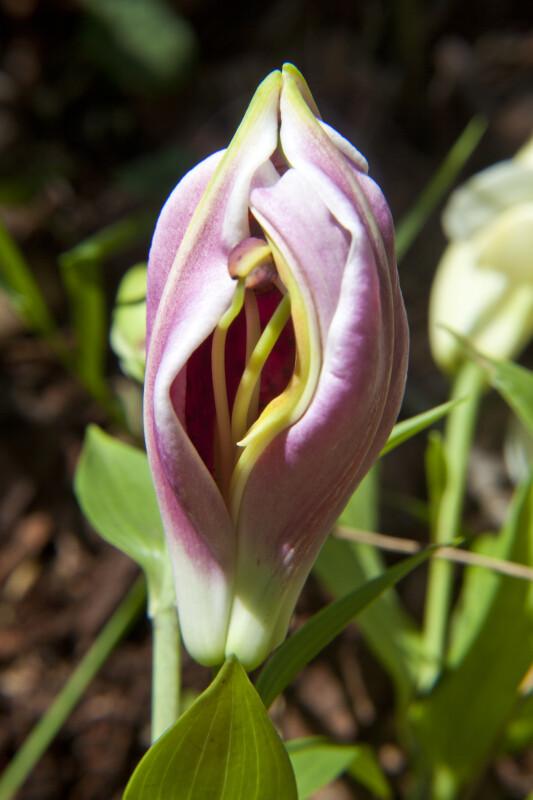 Blooming Flower in Monroeville, Pennsylvania.