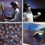 Blue-Violet photographs