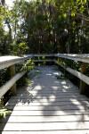 Boardwalk and Palms
