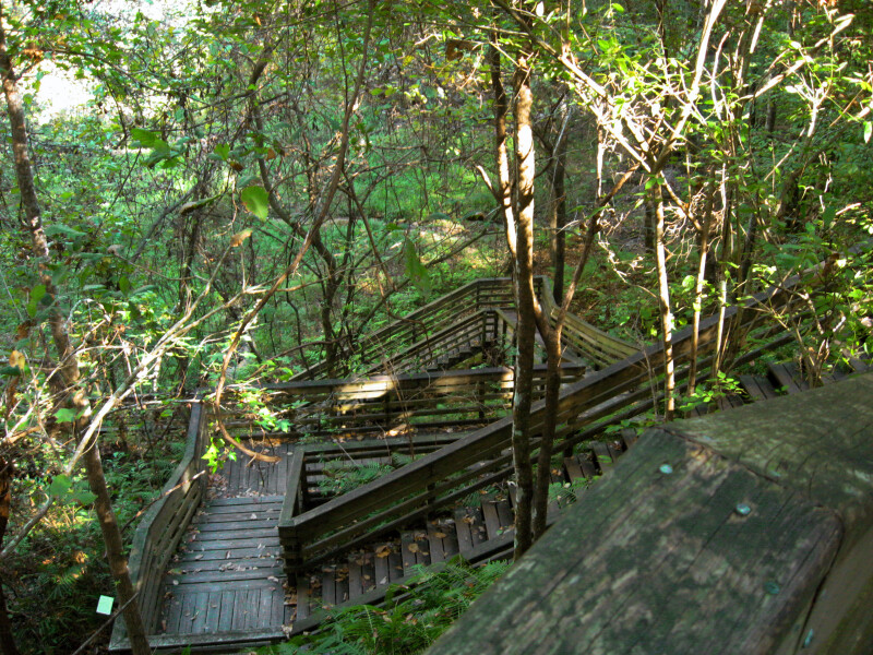 Boardwalk at Devil's Millhopper