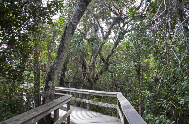 Boardwalk at Mahogany Hammock of Everglades National Park with Trees and Branches Surrounding it
