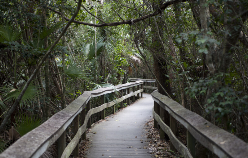 Boardwalk at Mahogany Hammock of Everglades National Park