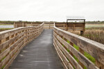 Boardwalk at Myakka River State Park