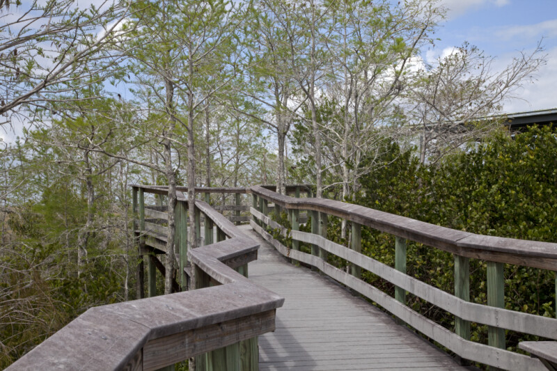 Boardwalk at Pa-hay-okee Overlook of Everglades National Park with Bald Cypresses on its Sides