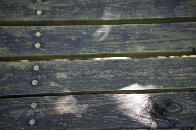 Boardwalk Detail
