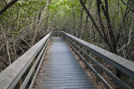 Boardwalk Leading Through Mangroves at West Lake of Everglades National Park