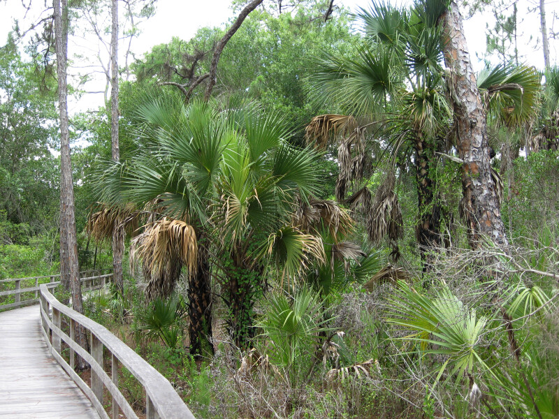 Boardwalk Vegetation