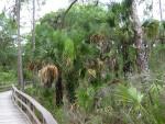 Boardwalk Vegetation