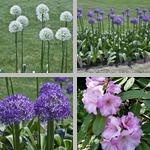 Boston Public Garden photographs