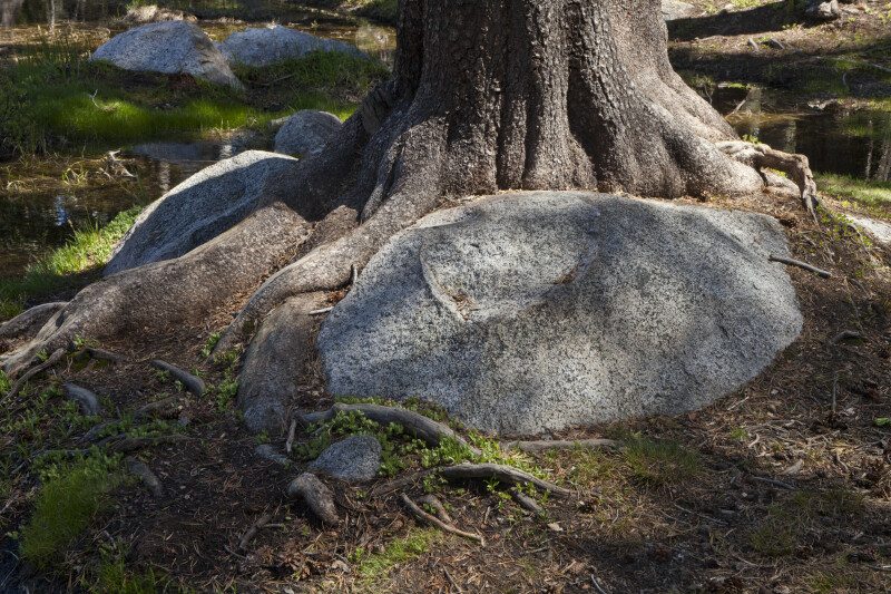 Boulders and Tree Roots