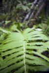 Branch of a Fern