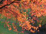 Branch of Yellow-Red Autumn Leaves