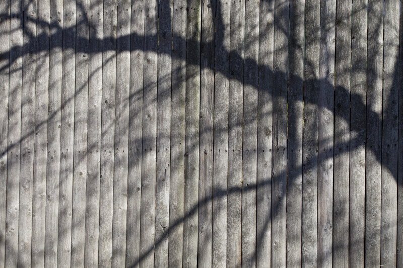 Branch Shadow