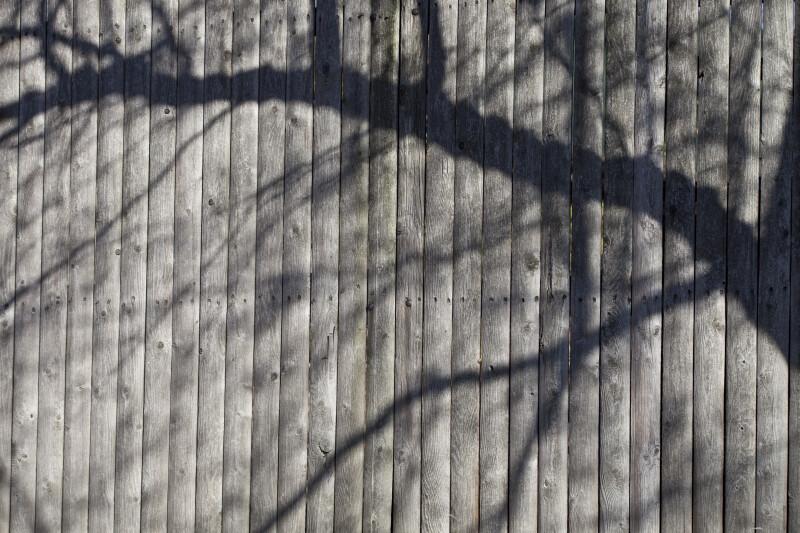 Branch Shadow